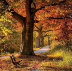 Into fall Photo by Image Nature, All Nature, Amazing Nature, Beautiful World, Beautiful Places, Beautiful Pictures, Wonderful Places, Fall Pictures, Fall Photos