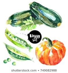 Painted isolated natural organic fresh eco food illustration on white background. Veggies design of zucchini, pumpkin, peas Nature Drawing, Food Drawing, Circle Template, Art Courses, Book Projects, Fruit And Veg, Food Illustrations, Watercolor Paintings, Watercolours