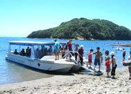 Glass Bottom Boat - Goat Island - 101 Must-Do's for Kiwis Glass Bottom Boat, Beautiful Scenery, Fun Things, New Zealand, Goat, My Photos, Ocean, Island, Beach