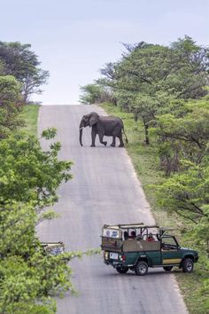 Your First Safari to The Kruger Park Elephant Crossing Road