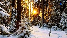 ♡ A Winter Morning - FIONA JOY (relaxing music)
