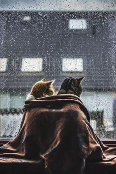 ☔️ rainy day ☂