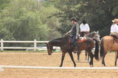 Abadon -SA Boerperd Horses, Animals, Animais, Animales, Animaux, Animal, Horse, Dieren