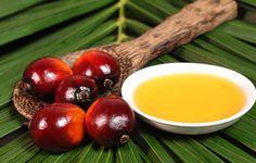Ulei de palmier