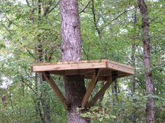 1000+ images about Zip Line on Pinterest   Platform, Tree ...