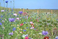 July Wild flower garden- www.bluepoppyflorist.com Garden Retaining Wall, Wild Flowers, Wedding Flowers, Wall Gardens, Plants, Wildflowers, Plant, Planets, Bridal Flowers