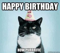 Funny Birthday Cat Memes