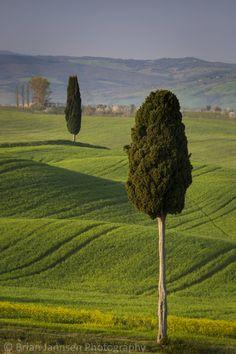 Cypress trees and winding road to villa near Pienza, Tuscany, Italy. © Brian Jannsen Photography