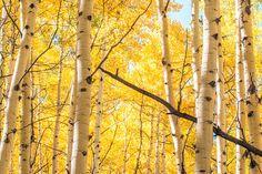 Colorado Color | by Stephanie Sinclair