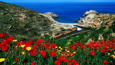 Aiming to assist travellers planning ahead for their summer holidays, Wanderlust magazine has placed the Greek island of Ikaria among its top 12 choices for… Samos, Greece Travel, Hawaii Travel, Ikaria Greece, Harry Potter, Nature Wallpaper, Hd Wallpaper, Greek Islands, Nature Pictures