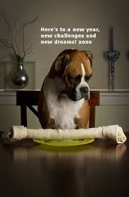 happy new year boxer dog - Google Search