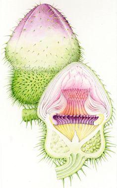 Botanical Art, Botanical Illustration, Botanical Gardens, Natural History, Natural World, Kew Gardens, Freelance Illustrator, Art Day, Art History