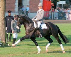 Rascalino, 2001 black 16.1 Hanoverian stallion. Rotspon/Velten Third. Rascalino came first in his performance test out of 31 stallions in 2004 with the knockout score of 153.37. He scored 8 temperament, 8 conformation, 10 for trot, 9 canter, 9 walk, 9 rideability, 7.67 for free jumping, 8.33 for jumping manner under saddle, and a high 9.67 for rideability under saddle in this jumping phase.
