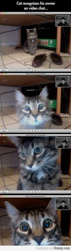Cat Recognizes His Owner On Video Chat  http://animalbuzzerstore.com/cat-recognizes-his-owner-on-video-chat/