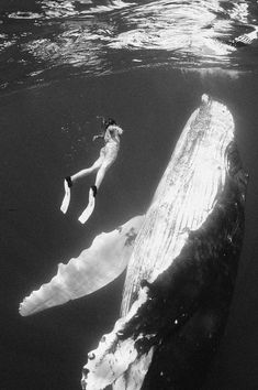 Swimming with whale