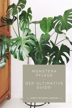 All Plants, Indoor Plants, Flip Furniture For Profit, Monstera Obliqua, Dulux Valentine, Spring Twists, Spring Wedding Colors, Spring Garden, Plant Care