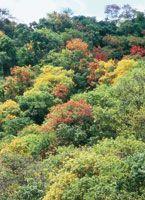Bosque seco tropical al comienzo del verano, cuando ostenta un follaje multicolor.