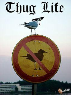 Thug Life... image drole