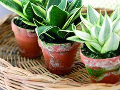 Renande och luftfuktande växter