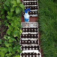 Flower seeds in egg cartons; the best part is that you can cut them up and plant the whole thing, cardboard, dirt and seedling.