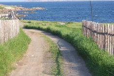 Mike & Mallory's B&B in Tilting Harbour - Houses for Rent in Tilting, Newfoundland, Canada Saltbox Houses, Harbor House, Newfoundland, B & B, Renting A House, Country Roads, Canada, Community, Island