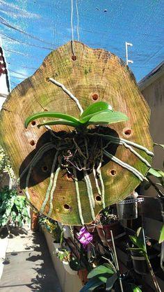 Orquídea no tronco