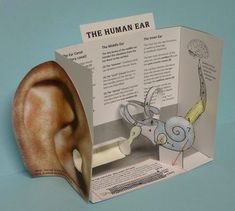 Paper model of the human ear CUT-AND-ASSEMBLE PAPER MODEL of the HUMAN EAR Target audience: Ages 10 and up (younger than 10 will need help assembling it) Materials needed: Copies printed onto lightweight … Science Biology, Science Classroom, Science Fair, Teaching Science, Science For Kids, Science Activities, Science Experiments, Science Education, Health Education