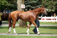 horse racing paddock walk up - Google Search
