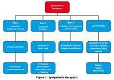 Central nervous system vs peripheral nervous system yahoo dating