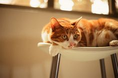 lazy afternoon by doistrakh on Flickr.