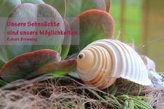 Unsere Sehnsüchte  sind unsere Möglichkeiten. Robert Browning www.spiralen.ch Snail, Paper, Animals, Longing For You, Clams, Spirals, Animales, Animaux, Snails