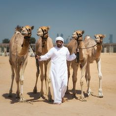 HH Sheikh Hamdan bin Mohammed Bin Rashid Almaktoum with his highness winner camels in Almarmoom heritage festival. ▃ ▃ ▃ ▃ ▃ ▃ ▃ ▃ ▃ ▃ ▃ ▃ ▃ ▃ ▃ ▃ ▃ ▃ # repost from @ Hrhg33