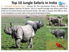Kaziranga National Park >>>> http://www.365hops.com/blog/top-10-jungle-safaris-in-india-2/  #NationalParks, #WildlifeSanctuary, #WildlifeSafaris, #JungleSafaris #India #365Hops #Kaziranga #Assam