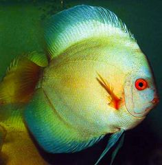 30 Aquarium Wish List Ideas Aquarium Fish Pet Aquarium Fish