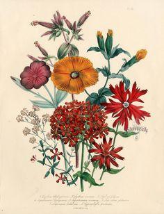 Jane Loudon Botanical Prints 1840. Цветочные принты.