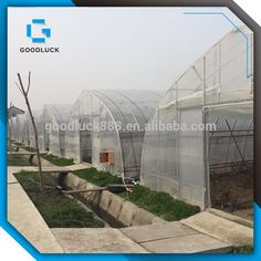 Single Span Tunnel PE Film Agricultural Greenhouses
