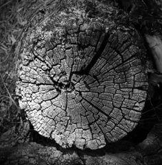 Banco de imagens : natureza, Preto e branco, plantar, madeira, textura, folha, flor, tronco, velho, solo, monocromático, círculo, fechar-se, Desgastado, toco de árvore, argolas, seção, corte transversal, Macro fotografia, Fotografia monocromática, Planta lenhosa 3320x3388 -  - 484732 - Imagens Gratuitas - PxHere