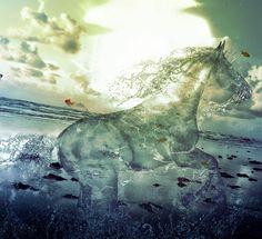 water_stallion_by_pshoudini-d49gqyp.jpg (935×855)