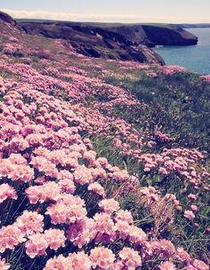 """Pigment Blog """"Doo Uap into Spring"""" #Flowers #spring #california #coast"""