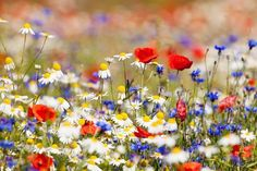 'Weeds are flowers too, once you get to know them.' - Winnie the Pooh.  #WorldEnvironmentDay