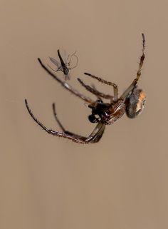 Le repas de l'araignée by Robert Padovani on 500px