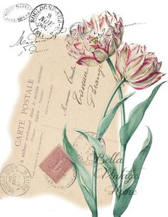 Original artwork created from vintage bookplates, etchings & papers. Printed in the USA on handcrafted paper Mais Vintage Ephemera, Vintage Paper, Vintage Postcards, Botanical Illustration, Botanical Prints, Art Nouveau Poster, Shabby, Vintage Art Prints, White Tulips