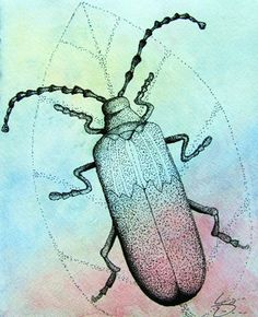 Artsonia Art Gallery - Pen & Ink Stippled Insect on Watercolor Paper Drawing Projects, Art Projects, Drawing Ideas, 7th Grade Art, Bug Art, Bugs And Insects, Stippling, Art Lesson Plans, Art Portfolio