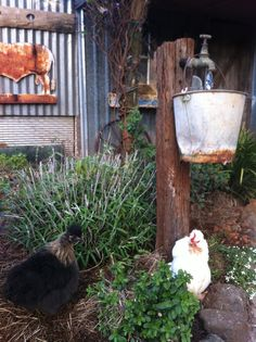 This is my take on the GARDEN ART I saw on Pinterest a while ago. Chooks. Rusty bucket old tap and crystal water droplet. Australia. Toowoomba