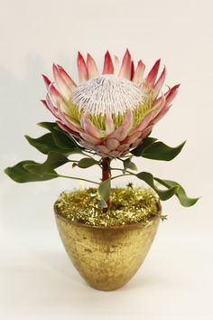 King in Gold #protea