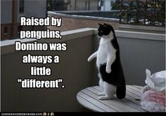 """Raised by penguins, Domino was always a little """"different""""."""