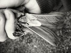 holding a bird by André Lui Bernardo on Creative Market