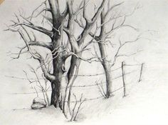 Realistic Drawings How to draw trees in pencil is a question by many of the beginners in pencil drawing. Trees demand a unique composition with branches and leaves. Tree Drawings Pencil, Pencil Drawing Tutorials, Pencil Art, Art Tutorials, Pencil Trees, Tree Sketches, Drawing Sketches, Art Drawings, Sketching