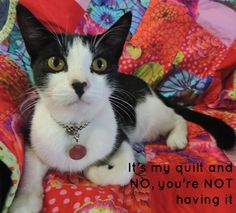 Cat and his Quilt. The adventures of Philly the Wonder cat