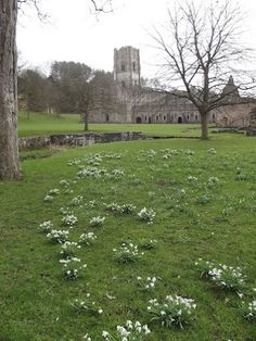 Springtime at Fountains Abbey